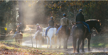 Several horses with riders walking together on a trail on the estate surrounded by nature