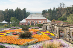 The walled garden full of fall mums