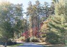 Dogwood near Deerpark