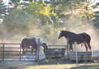Horse barn near Deerpark