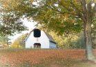 Maple near the carriage ride barn