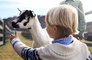 young child petting a goat at the farm
