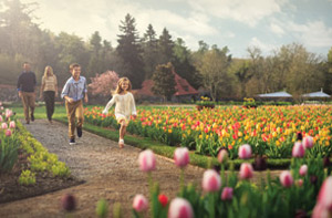 children run ahead of parents in walled garden full of tulips