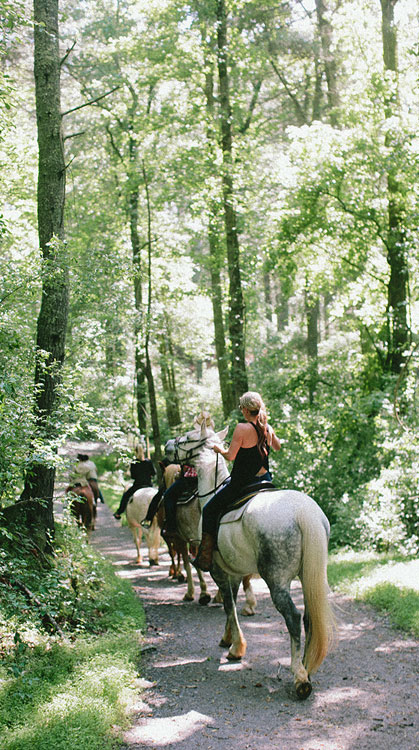 people on a horseback ride through the woods