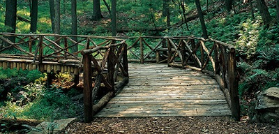 bridge leading to the forest