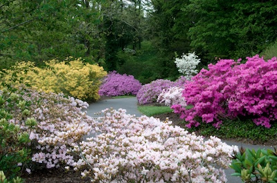 blooming walkway