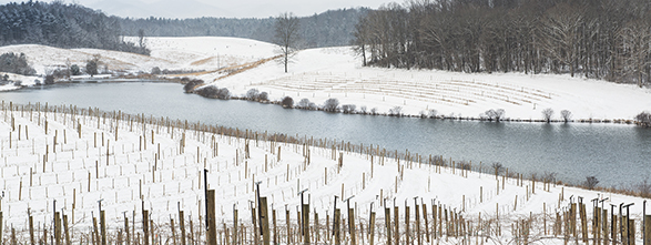 rolling Biltmore vineyards with a dusting of snow with a river in the background