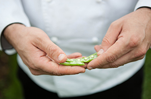 Biltmore chef hands holding a split pea pod