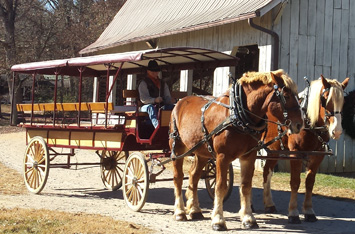 Draft horses pulling a carriage