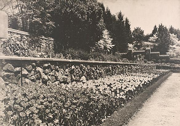 Tulips in the Walled Garden, 1930