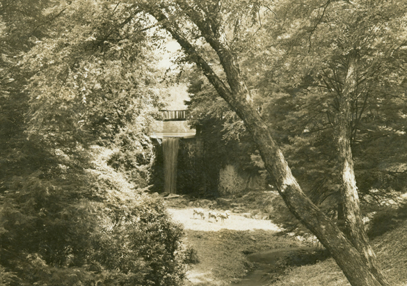 Photograph of deer at the Bass Pond Waterfall from the Biltmore collection, ca. 1950