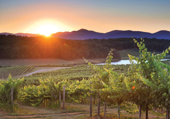 Biltmore Vineyards