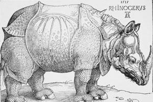 Rhinocerous by Albrecht Durer