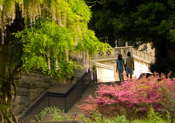Spring is a Special Time to Honor Olmsted | Biltmore