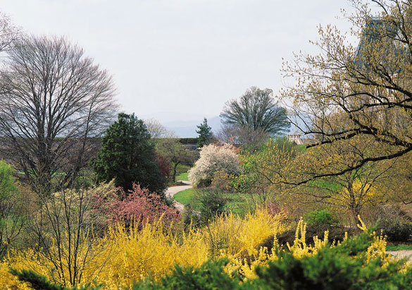 Spring blooms in Biltmore's Shrub Garden