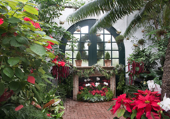 Live plants in the Conservatory at Biltmore