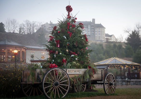 Live Christmas tree in Antler Hill Village at Biltmore