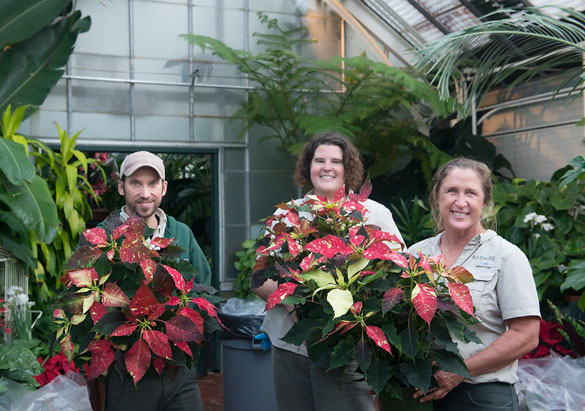 Members of Biltmore's landscaping team with poinsettias
