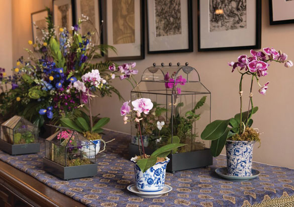 Orchids in the Salon