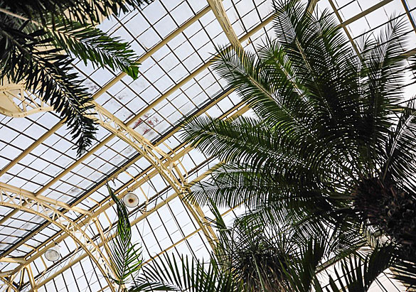 Palm House in Biltmore's Conservatory