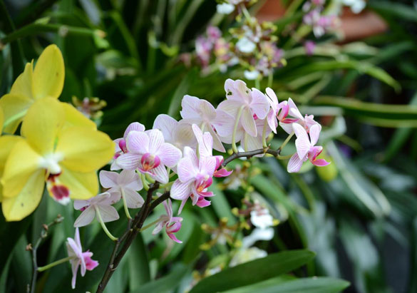 Orchid Room in Biltmore's Conservatory
