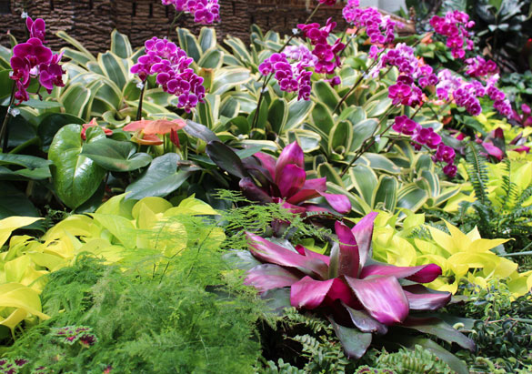 Bromeliads and orchids in the Conservatory