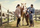20-family horse-2