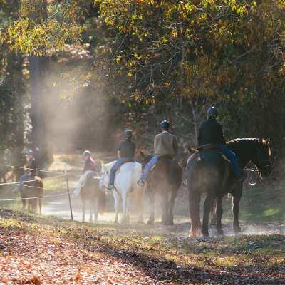 Horseback Riding At Biltmore | Biltmore