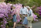 Azaleas and family