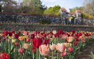 Spring at Biltmore