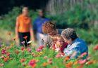 Family garden flowers