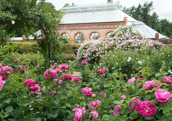 Biltmore's historic rose garden and Conservatory