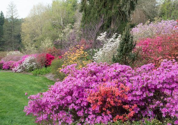 Azalea garden at Biltmore