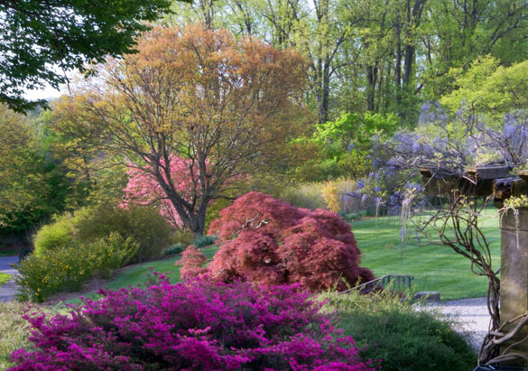 Shrub garden in bloom at Biltmore
