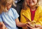 Hold fluffy chicks and pet other cute farmyard animals.