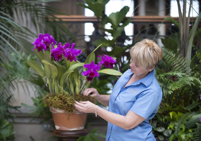 Orchids Take The Stage At Biltmore Later This Month Biltmore