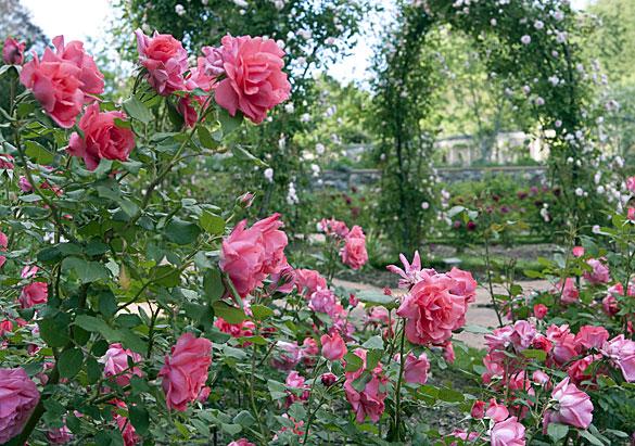 Lucas Jack and Biltmore\'s Rose Garden | Biltmore