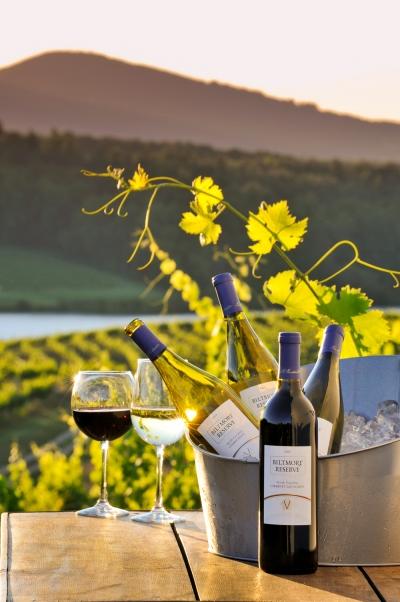 biltmore s vineyards biltmore