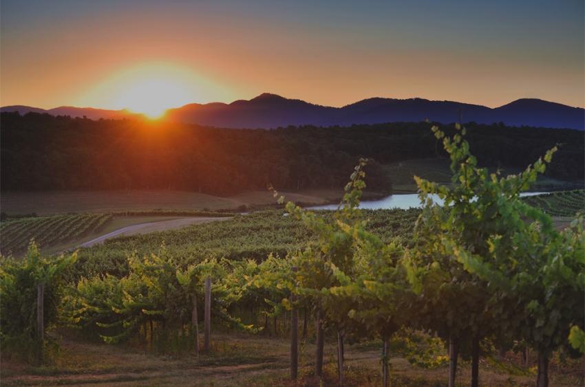 Horizontal-vineyard-image-sz