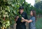 Our Winemakers Bernard Delille and Sharon Fenchak check the grapes' progress as we get close to harvest season.