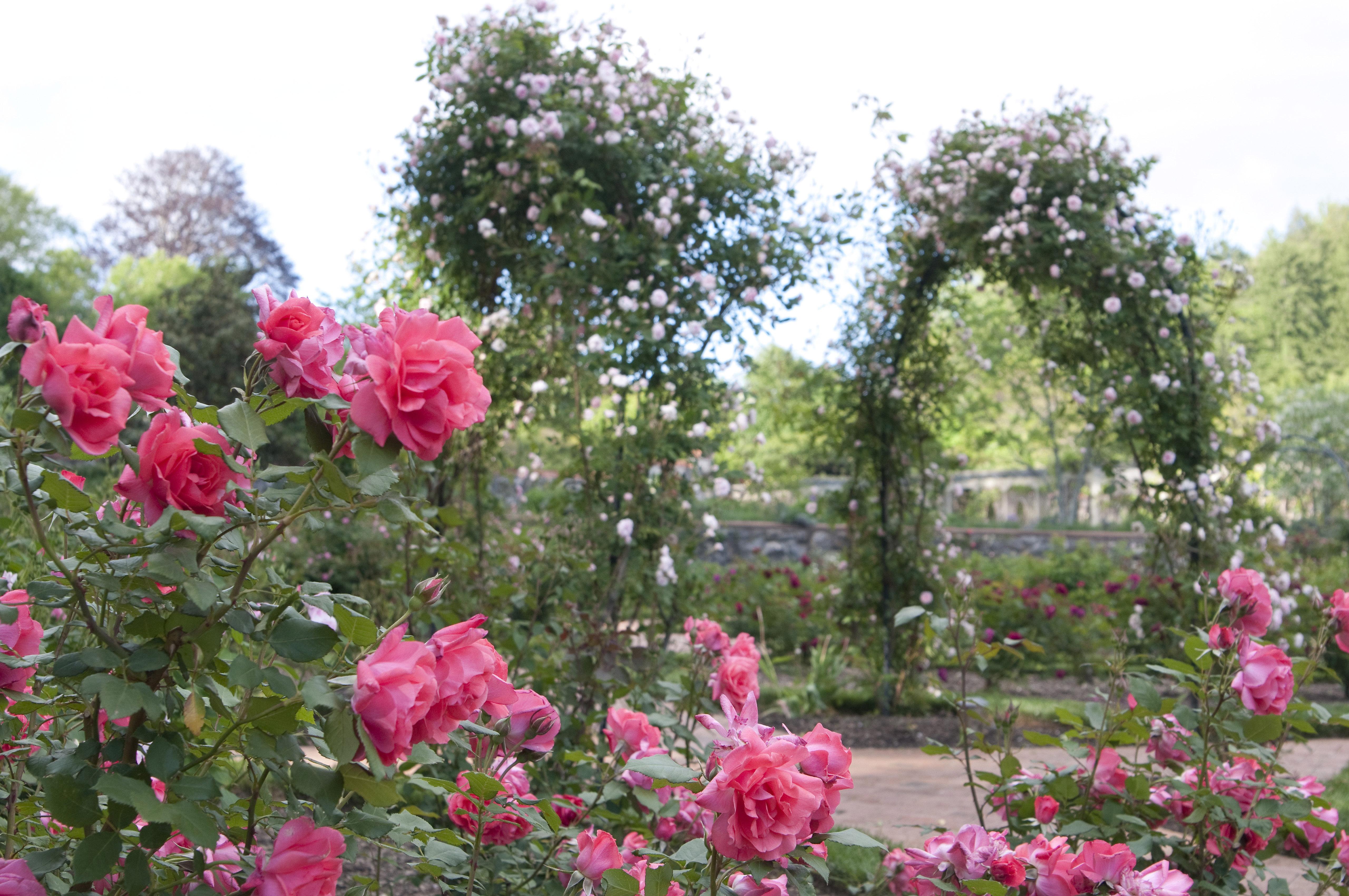 Rosegarden 8