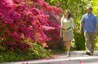 Azaleas and couple