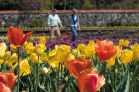 Couple in tulips