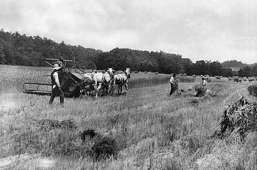 Field harvest