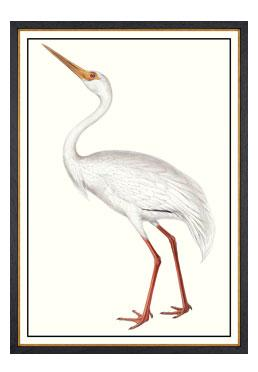 John Gould - White Crane - Available Online