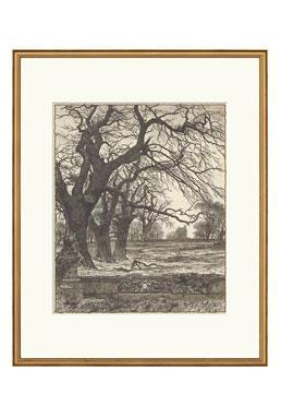 Black & White Engravings - Allee of Oaks
