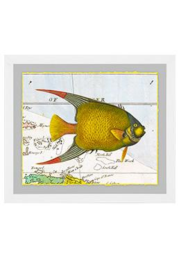 Atlantic Angler - Angel Fish