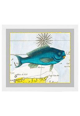 Atlantic Angler - Blue Parrotfish