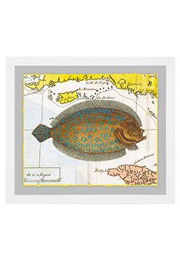 Atlantic Angler - Sole