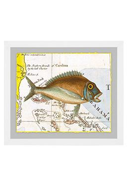 Atlantic Angler - Sunfish